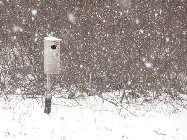 winterScene1.jpg