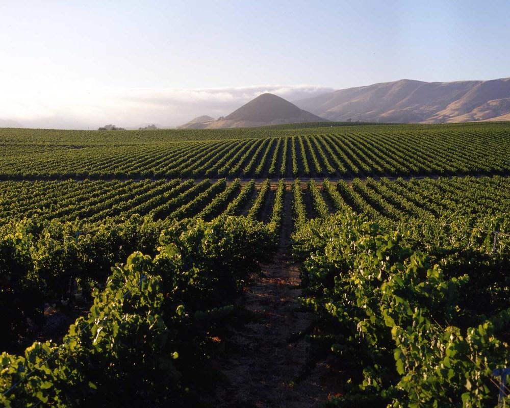 vineyard-architect.jpg