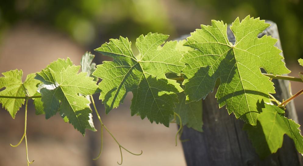 california_wine_regions.jpg