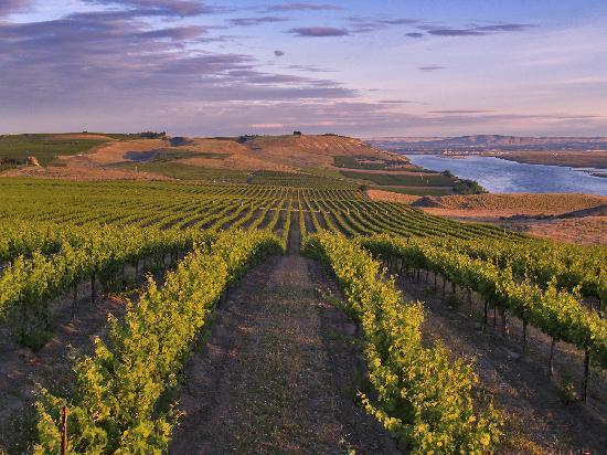 washington_wine_vineyard.jpg