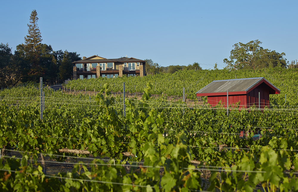 The residence is surrounded by a mature vineyard.