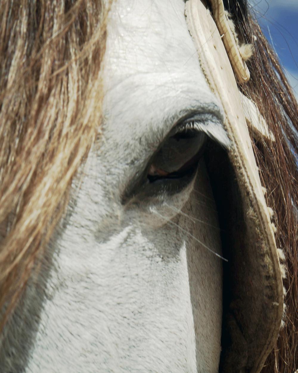 horse_8x10.jpg