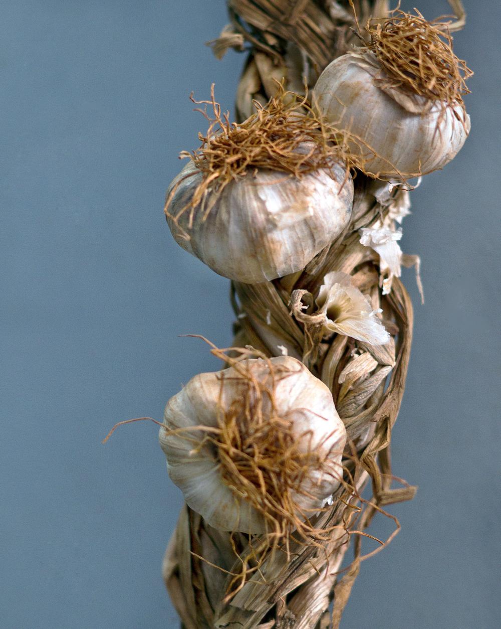 garlic_8x10.jpg
