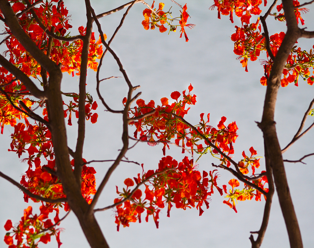 red leaves_11x14.jpg