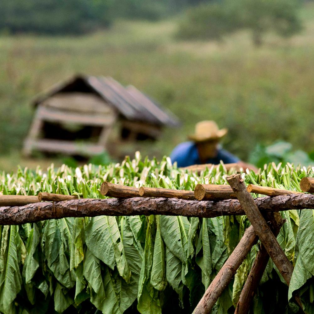 tobacco barn_10x10.jpg
