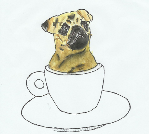 THE PUGUCCINO HAS A BITTER TASTE
