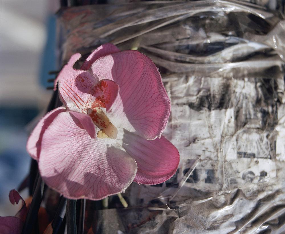 blooms 015_1.jpg