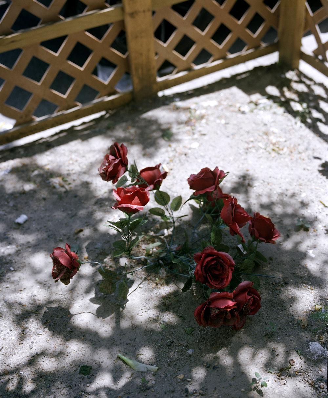 blooms 017_1.jpg
