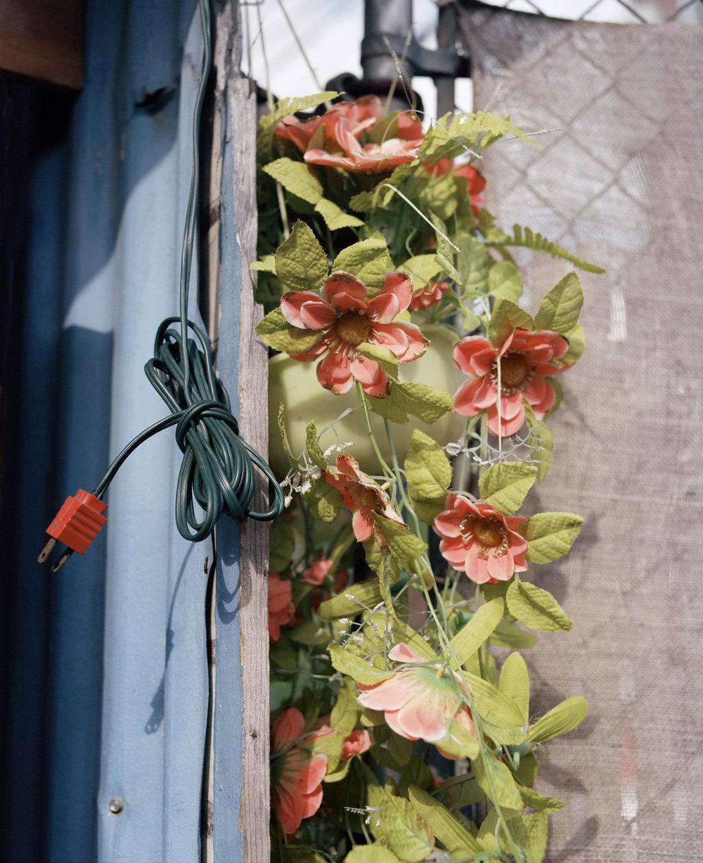 blooms 019_1.jpg