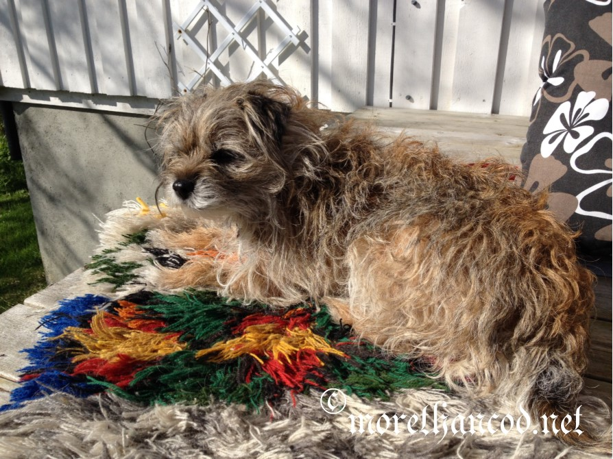 Maggie (AKA FiberDog) enjoying some summer sun on her båtrye woven of thrums.