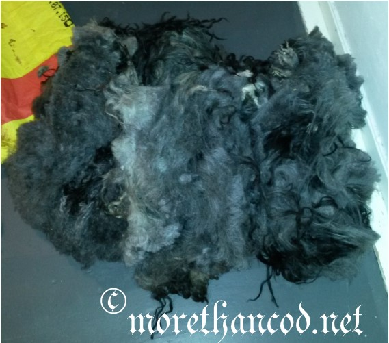 Colored spælsau lamb fleece nr. 2, also displaying mostly undercoat.  Photo by A. Steffensen