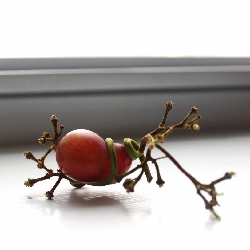 picture-of-strange-grape