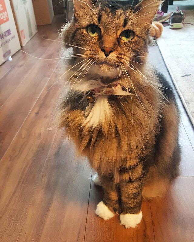 Rylee is such a doll 😍 #canidogwalkingco #nofilter #houstonpetsitter #houstoncatsitter #catsofinstagram #rylee #catsofhouston #houstonpets