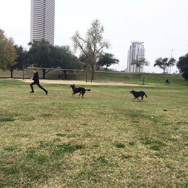 #tbt #takeyourpartnertoworkday 😂💕 ~~~~~~~~~~~~~~~~~~~~~~~ #canidogwalkingco #houston #spottspark #houstondogwalker #houstonpets #dogsofinstgram #dogsofhouston #houstonpets #houstonpetsitter #greaterswissmountaindog #australiancattledog