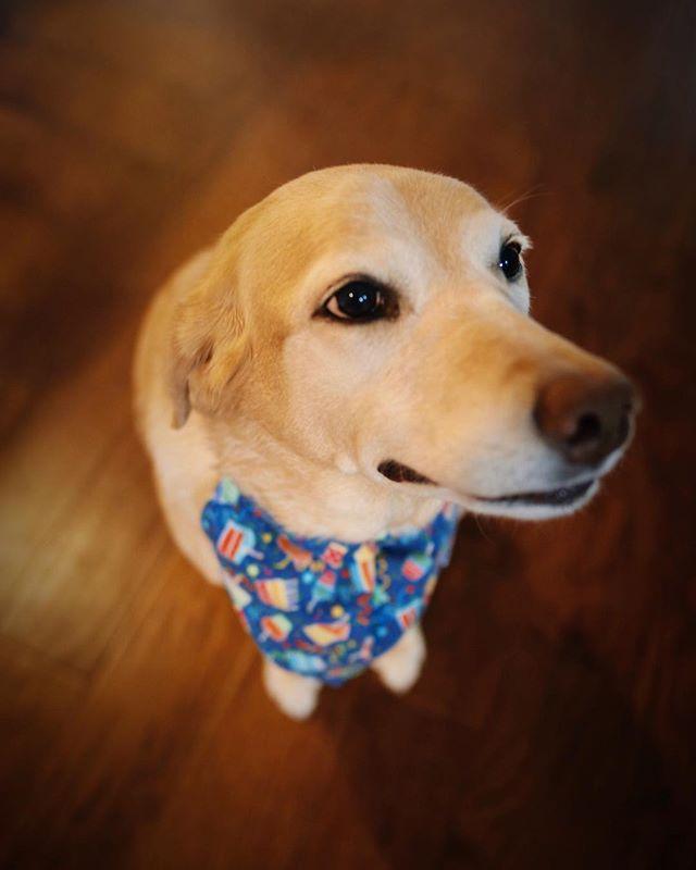 Birthday girl Clementine! 🍰 🎂 🎉 . . . . . . . . . #clementine #houston #houstontexas #houstonpetsitting #houstondogwalking #houstondogwalker #houstonpetsitter #dogwalker #dogwalking #petsitting #dogsofinstagram #dogs #dog #puppy #dogsofhouston #houstondogs #houstonpets #canidogwalkingco #doglove #doglovers #instagood #dailydogs #dailydog  #igdogs #photography #houstonphotography #dogphotography #nature #canonusa