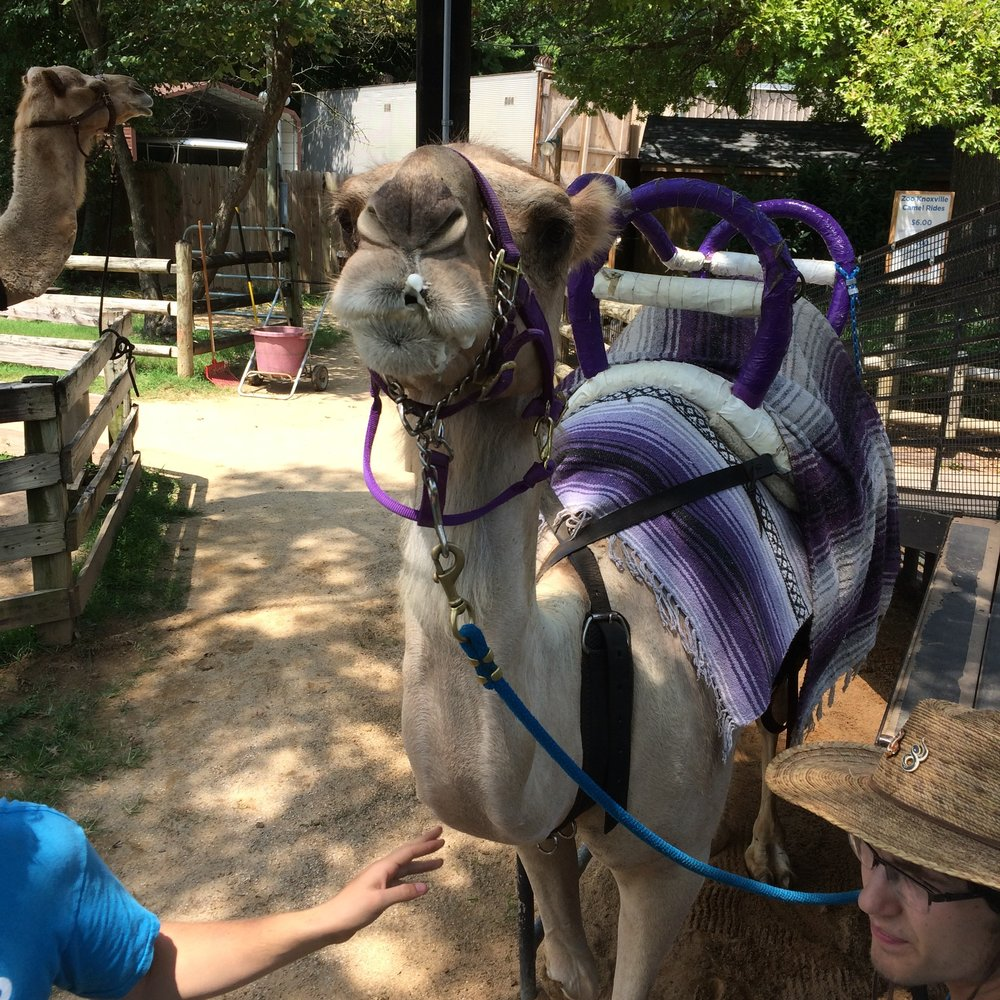 - We ended our trip with an extra day in Knoxville (Thank you, Allegiant Airlines, for canceling our flight+ providing no alternatives. Travel Tip: Do NOT fly Allegiant). We spent the day at the Knoxville Zoo!
