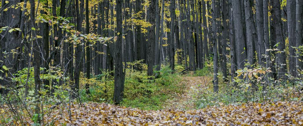 Collingwood-Ontario-12.jpg