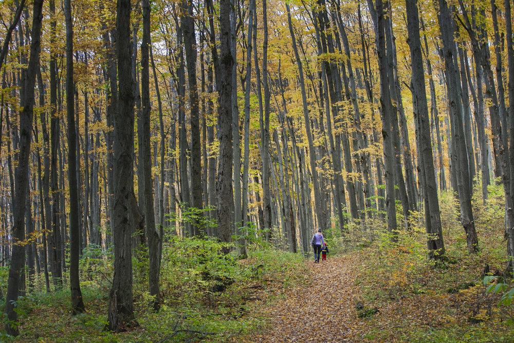 Collingwood-Ontario-54.jpg