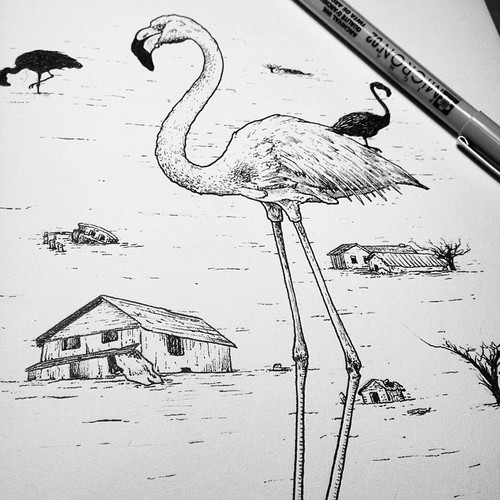 AndrewHaines_FlamingoSketch1.jpeg