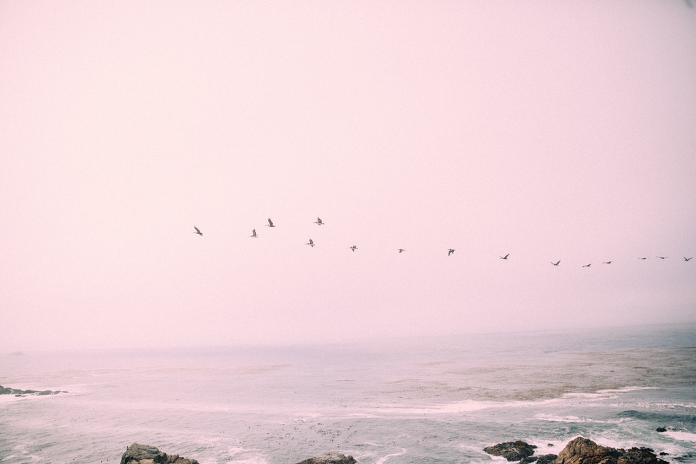 birdonawirephotography_jschenke