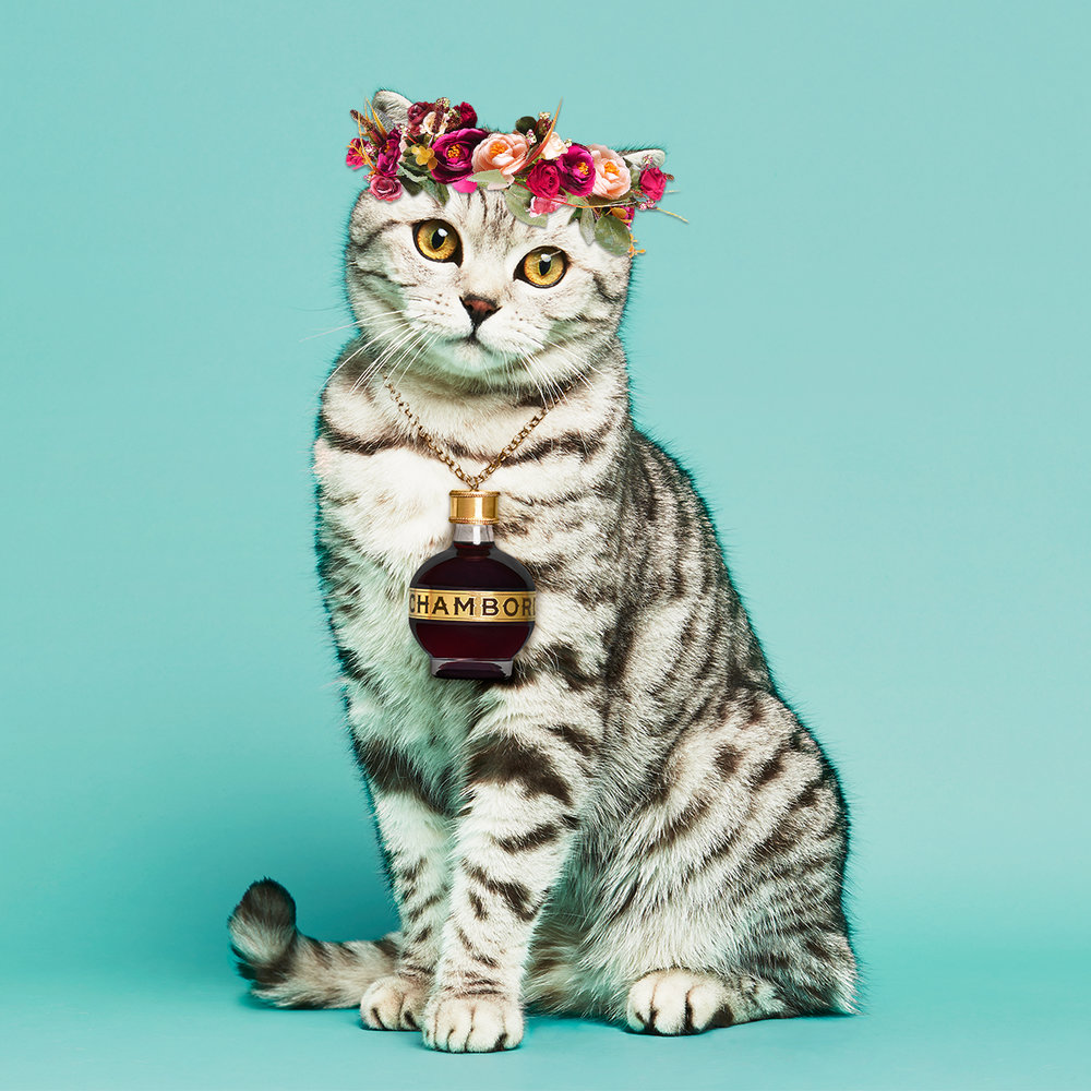 CHA_0001_Social_BrandLove_April_Coachella-Floral-Crown-Cat.jpg