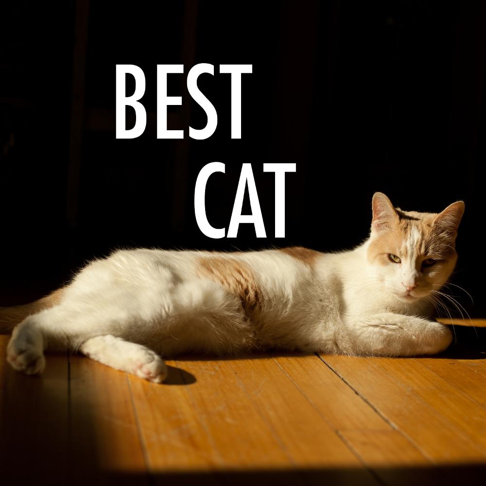 bestcat.png