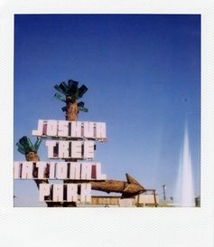 joshuatree-unknown.jpg