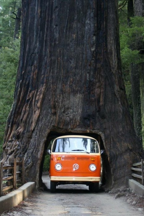 sequoia-unknown.jpg