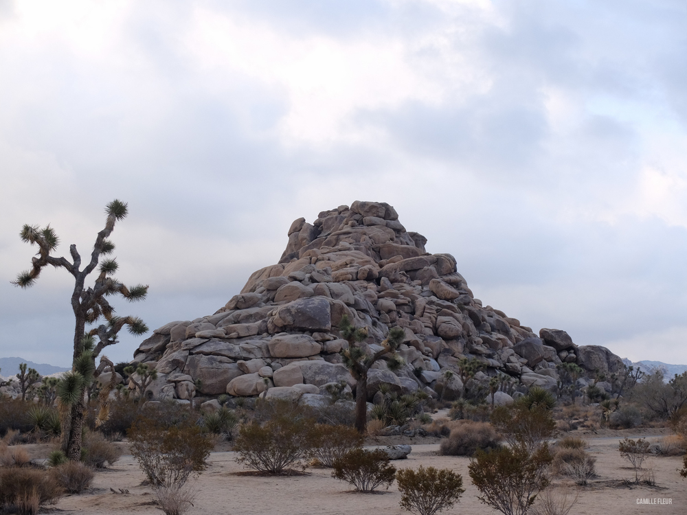 roadtrip-joshuatree-18.jpg