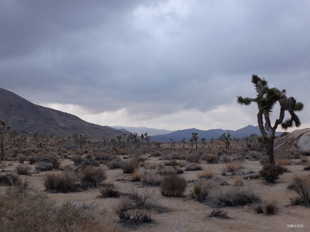 roadtrip-joshuatree-22.jpg