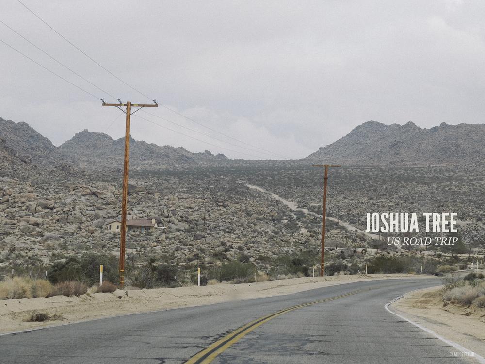 joshuatree
