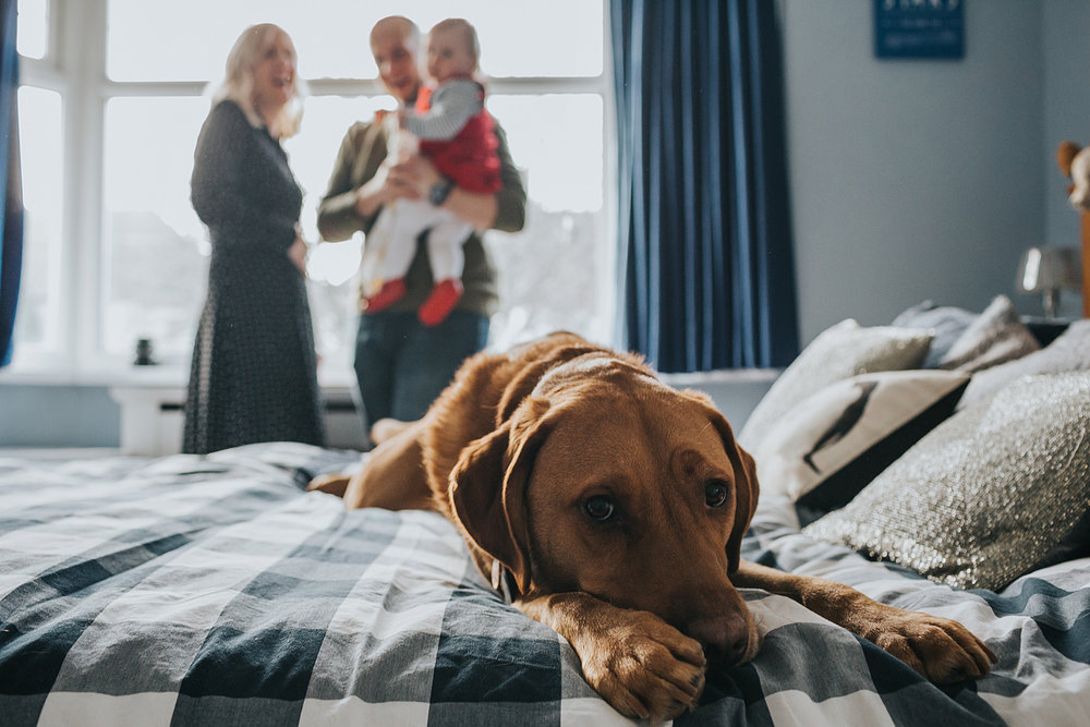 The family dog has a little rest of the bed, playing up to the camera during documentary family photo shoot, Liverpool. Family are pictured laughing behind the dog.