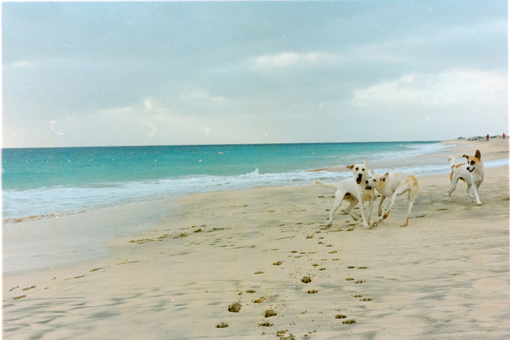 Cap Verde dogs on beach.jpg