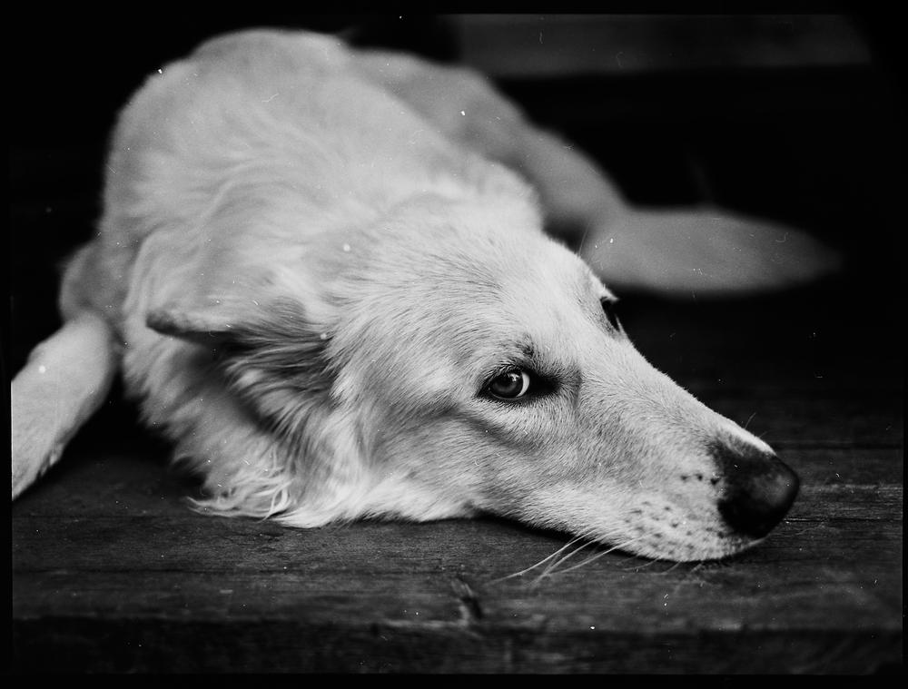 Fantastiska hunden Pila. Himla fin kompis.