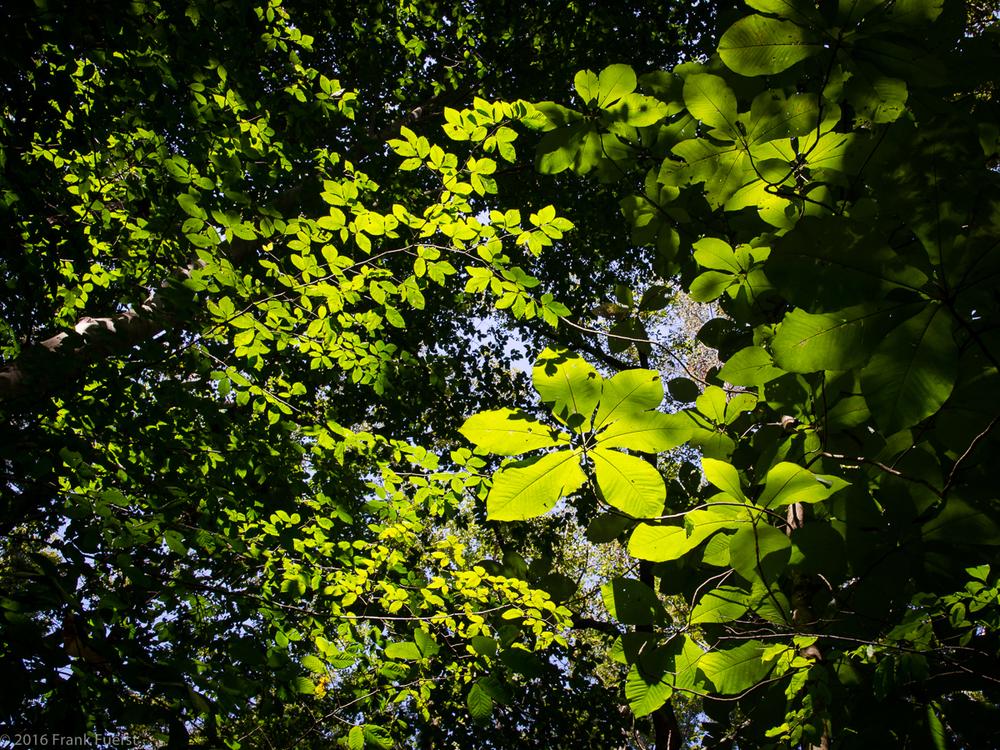 naturecolor-1.JPG