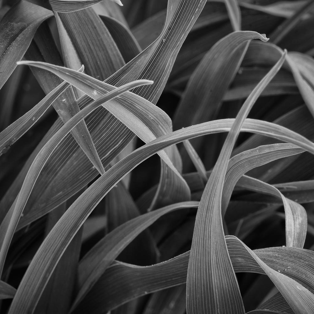 day lillies-1.JPG