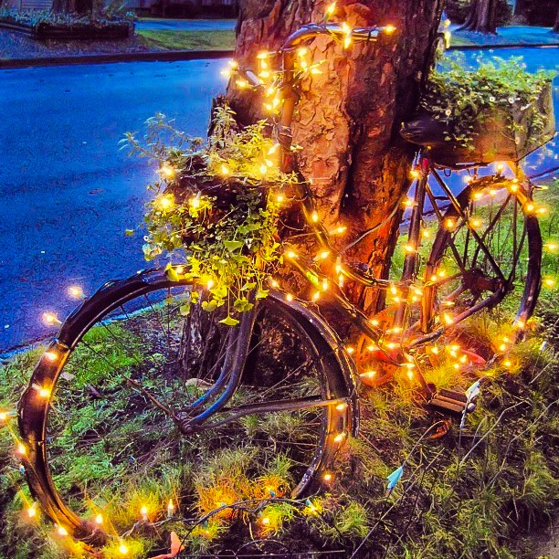 Bikabout-Bicycle-Christmas-lights.JPG