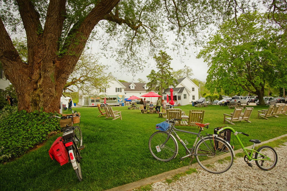 The vineyards common lawn has ample seating and huge, old oak trees to gaze up at.