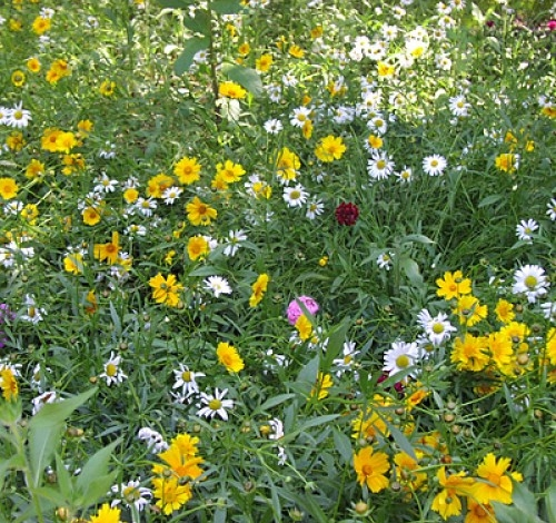 Perennial Wildflower Mix from American Meadows On Sale for $9.31 for 1/4 lb of seeds