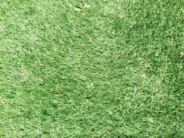 Fake News, No/ Fake Lawn, Yes: I always feel like a bit of a loony landscape designer recommending synthetic lawn, but my clients love it and I have to say, i love it too. If you edge it, it can look quite modern, and well, edgy. I have it on our roof and it is edged with Ipe wood...no watering, no mowing, no nothing, and always green. Clients with kids and dogs have raved about it to me too--completely hose-able, so always clean. I have seen it used vertically in a similar way (edged with a metal) and it gave a really blah wall a much needed boost in texture and color. View Product Website