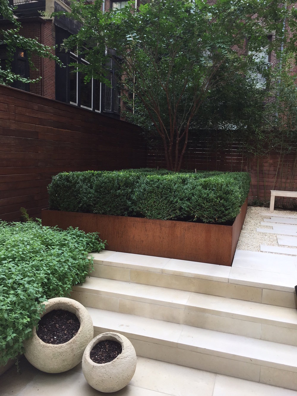 Here is boxwood used in a Corten-planter at a townhouse in Manhattan. The Client wanted low maintenance, green, and sculptural. Boxwood can be clipped to any form. Here I used the Korean type, and it is clipped to be slightly flat on top, almost like an object.