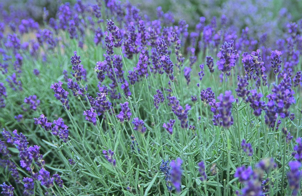 And who doesn't swoon over lavender? Maybe a few out there, but not many...View Product here