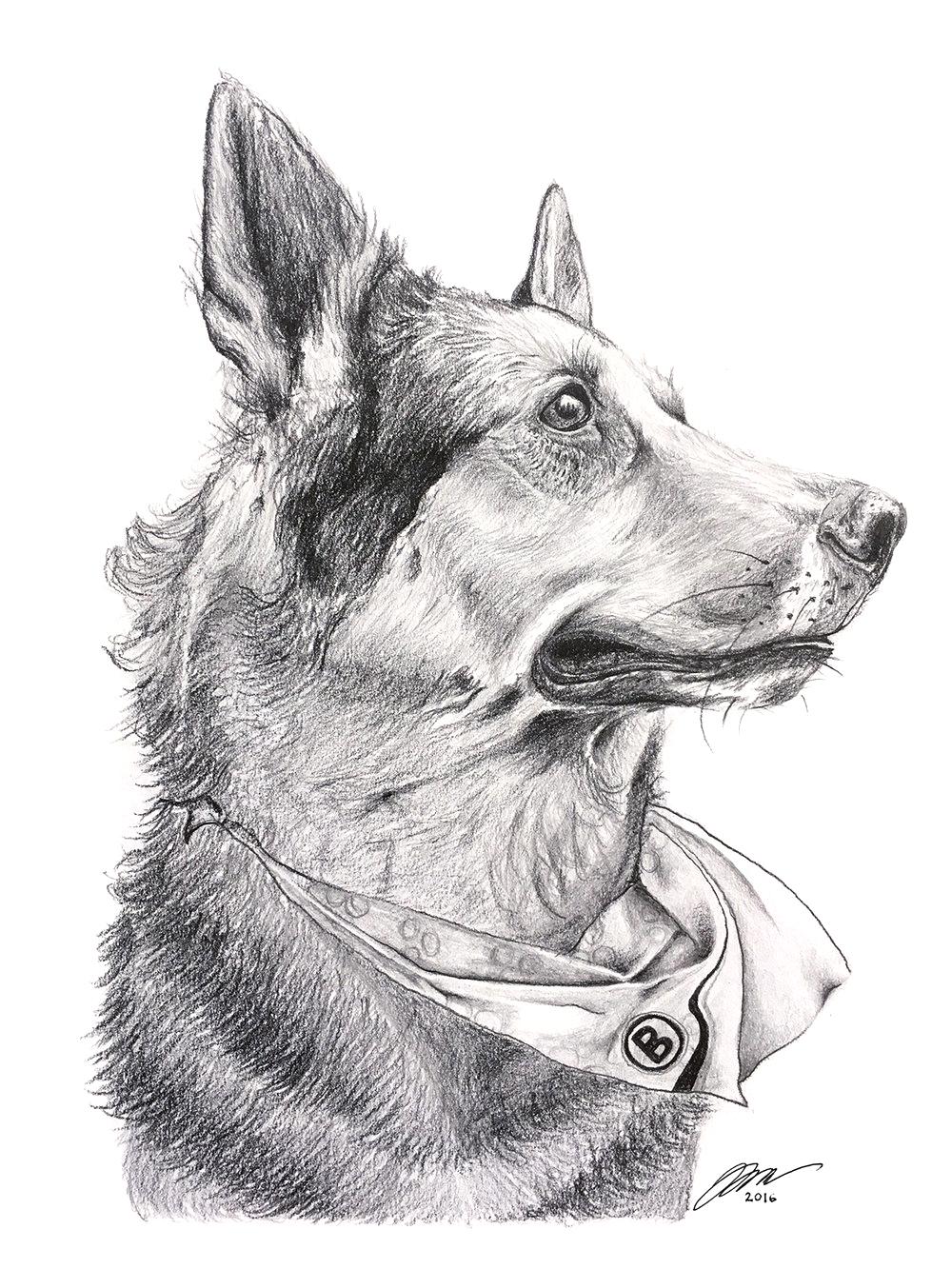 German Shepherd by LK Weiss