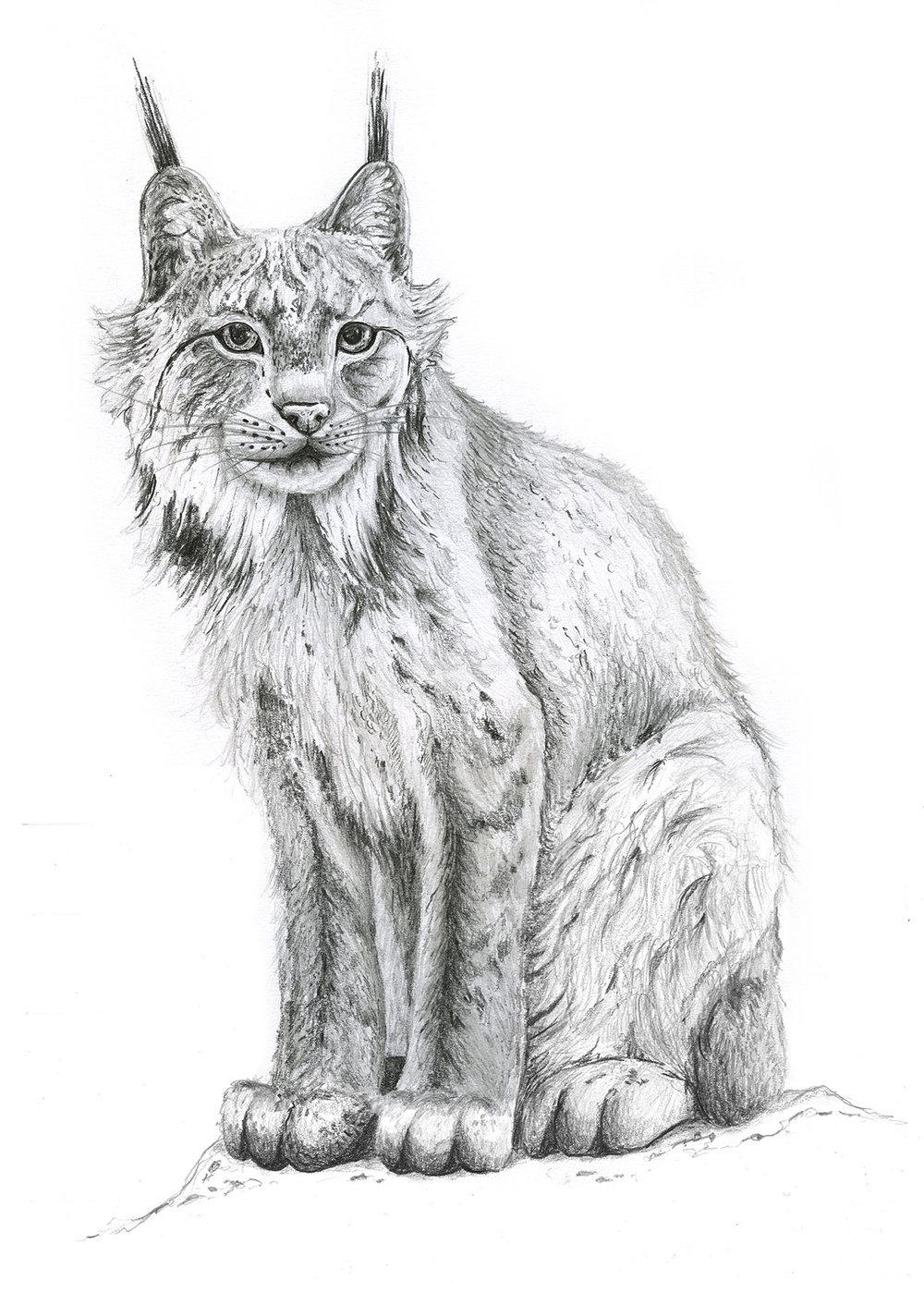 Lynx by LK Weiss