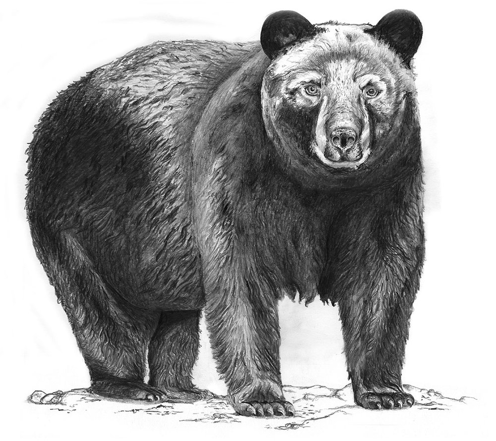 Bear by LK Weiss