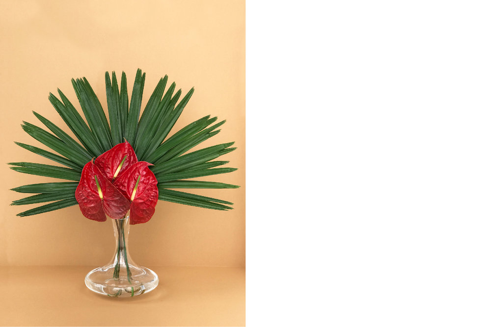 A spiky halo of fronds from a Bismarck palm makes a cluster of Anthuriums appear more exotic.