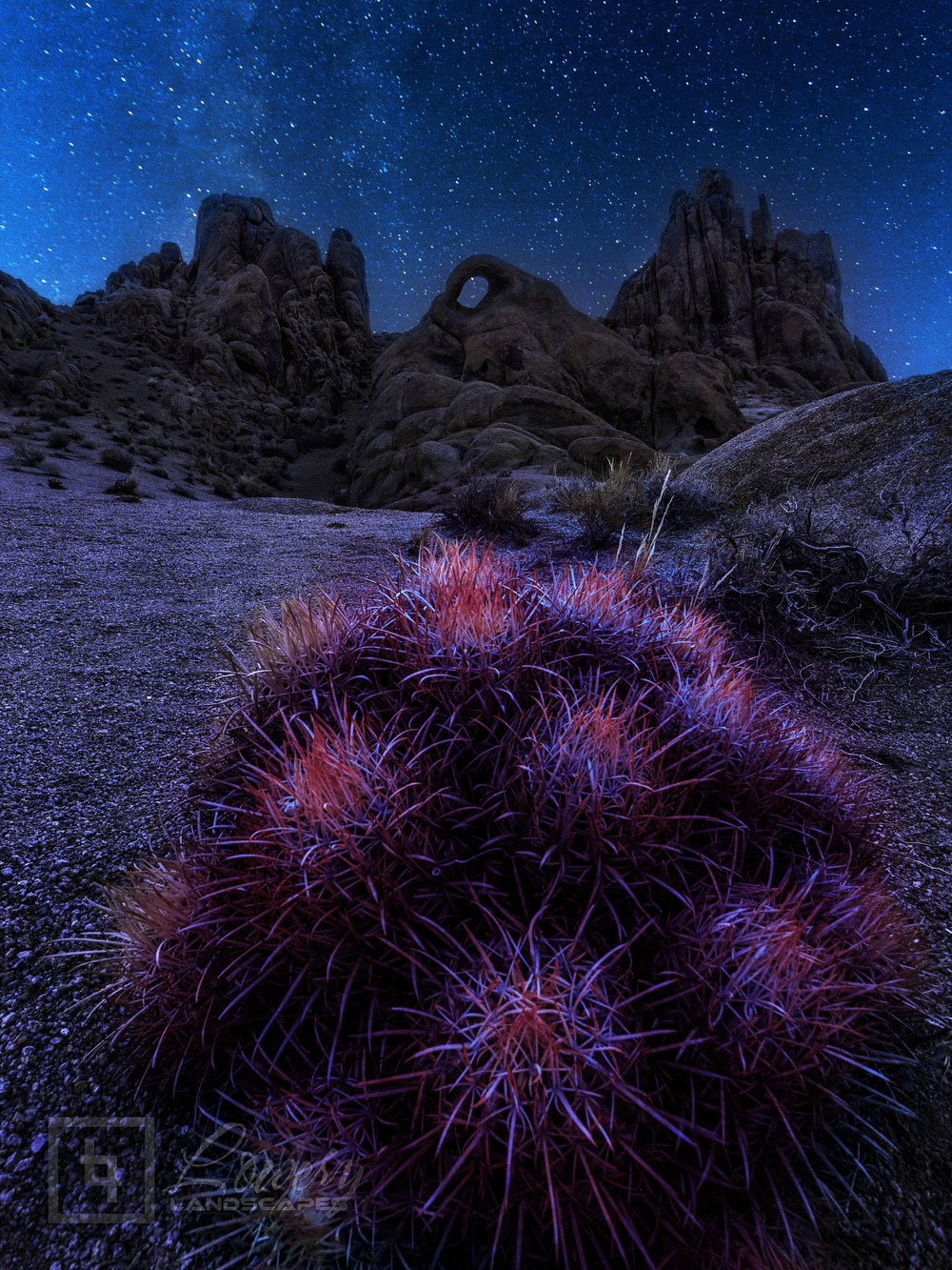 A cluster of pink Barrel Cacti rest under the first light of dawn below a desert arch under the night sky in this blend of two exposures - one at 3am and the other during blue hour - to capture the full diversity of light in the scene.