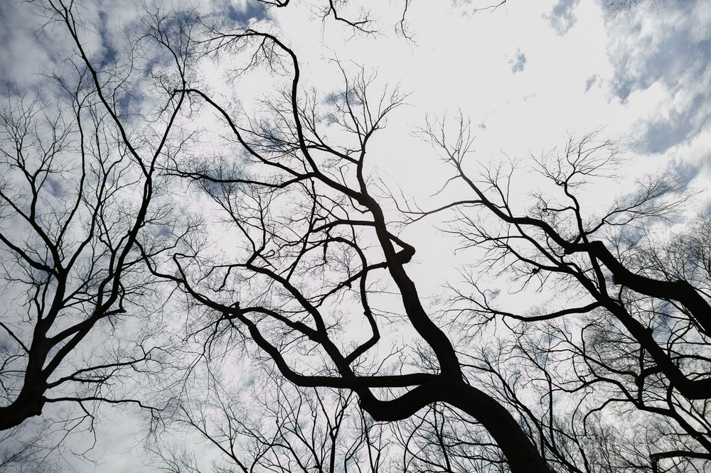 Central_Park_Spring_Elopement19.jpg