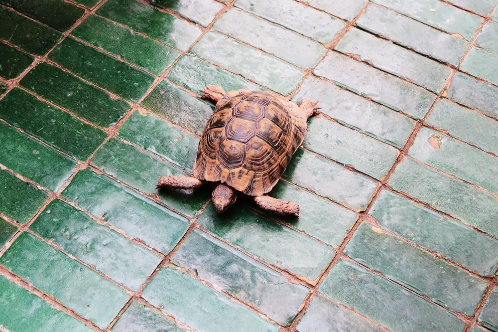 turtle_le_jardin_marrakech.jpg