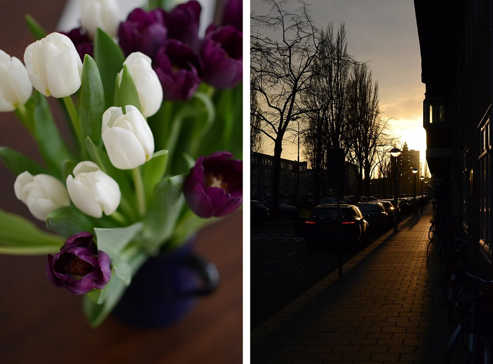 tulips_sunset.jpg